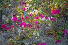 Mooie bloemen royalty-vrije stock foto's