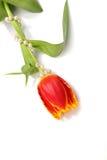 Mooie bloemen Stock Foto