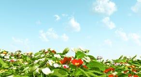 Mooie bloemen Royalty-vrije Stock Fotografie