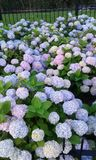 Mooie bloemen Stock Afbeelding