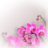 Mooie bloemen abstracte achtergrond Royalty-vrije Stock Afbeelding
