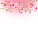 Mooie bloemen abstracte achtergrond, orchideeën die op wit worden geïsoleerd Royalty-vrije Stock Fotografie
