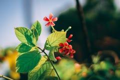 Mooie Bloemen & bladerenachtergrond - foto van bloemen & bladeren met ondiepe diepte van gebied royalty-vrije stock fotografie