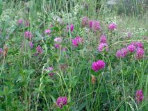 Mooie bloemen in de gebiedszomer Stock Fotografie