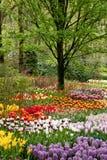 Mooie bloemen in de lente Stock Foto