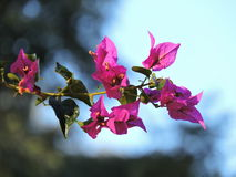 Mooie bloemen in de middag Royalty-vrije Stock Foto