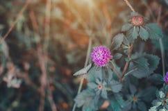 Mooie bloemen in de ochtendtuin stock afbeeldingen