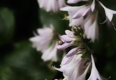 mooie bloemen in de slak van het tuineind Stock Foto