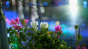 Mooie bloemen in de stralen van licht bij nacht stock videobeelden