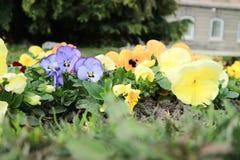 Mooie bloemen in de tuin stock afbeeldingen