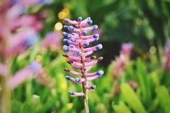 Mooie bloemen in de tuin stock fotografie