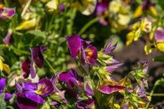 Mooie bloemen in de tuin Stock Foto's