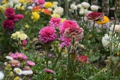 Mooie bloemen in de tuin Royalty-vrije Stock Afbeelding