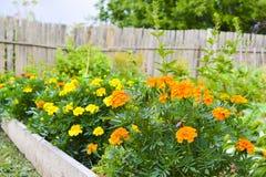Mooie bloemen in de tuin De achtergrond van een verscheidenheid bloeit royalty-vrije stock afbeeldingen