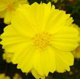 Mooie bloemen in de tuin in de loop van de dag stock foto
