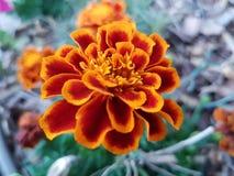 Mooie bloemen in de zomer in parken, huis in openlucht stock foto