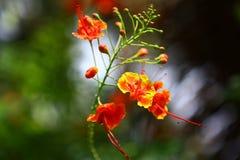 Mooie bloemen in de zonneschijn Royalty-vrije Stock Afbeeldingen