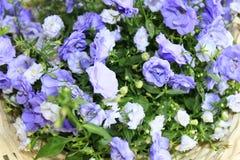 Mooie bloemen in een mand Royalty-vrije Stock Foto's