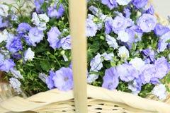 Mooie bloemen in een mand Stock Foto