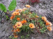 Mooie bloemen in een tuin Royalty-vrije Stock Afbeeldingen