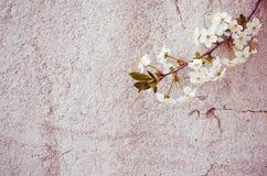 Mooie bloemen geweven achtergrond stock afbeelding