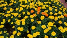 Mooie bloemen in het park stock video