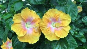 Mooie bloemen in het park stock videobeelden