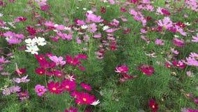 Mooie bloemen in het park stock footage