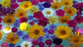 Mooie bloemen in het water stock video