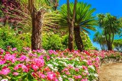 Mooie bloemen, installaties en bomen, Rufolo-tuin, Ravello, Italië, Europa Royalty-vrije Stock Foto's