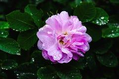 Mooie bloemen met dalingen op de bladeren Royalty-vrije Stock Foto