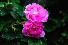 Mooie bloemen met dalingen op de bladeren Stock Afbeeldingen