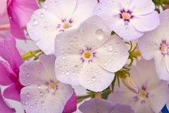 Mooie bloemen met waterdalingen Stock Foto