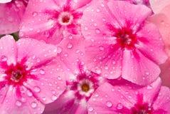 Mooie bloemen met waterdalingen Royalty-vrije Stock Foto's
