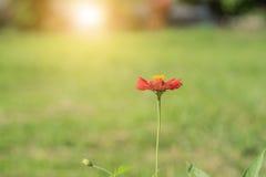 Mooie bloemen met zonlicht Royalty-vrije Stock Foto's