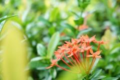 Mooie bloemen onder de bloemen royalty-vrije stock foto's