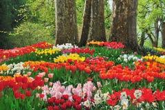 Mooie bloemen onder drie bomen Royalty-vrije Stock Afbeelding