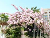 Mooie bloemen op een Turkse straat in de zomer Royalty-vrije Stock Foto
