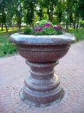 Mooie bloemen op het bloembed van marmer Royalty-vrije Stock Afbeelding