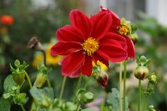 Mooie bloemen op het gebied royalty-vrije stock afbeeldingen