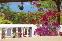 Mooie bloemen op St Lucia Caraïbisch strand, stock afbeelding