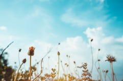 Mooie bloemen over blauwe hemel met wolken Uitstekende toon royalty-vrije stock afbeelding
