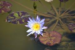 Mooie bloemen van Hawa? stock foto
