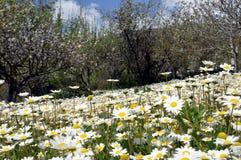 Mooie bloemen van tuin Royalty-vrije Stock Fotografie