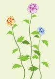 Mooie bloemen. Vector. Stock Foto's