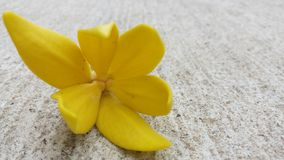 Mooie bloemen waardig van u  Royalty-vrije Stock Afbeelding