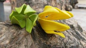 Mooie bloemen waardig van u  Stock Foto's