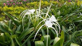 Mooie bloemen waardig van u  Stock Afbeeldingen