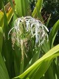 Mooie bloemen in woestijn stock afbeelding