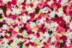 Mooie bloemenachtergrond stock afbeeldingen